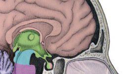 Dick Swaab: 'Wij zijn ons brein'