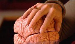 Margriet Sitskoorn: 'Het maakbare brein'
